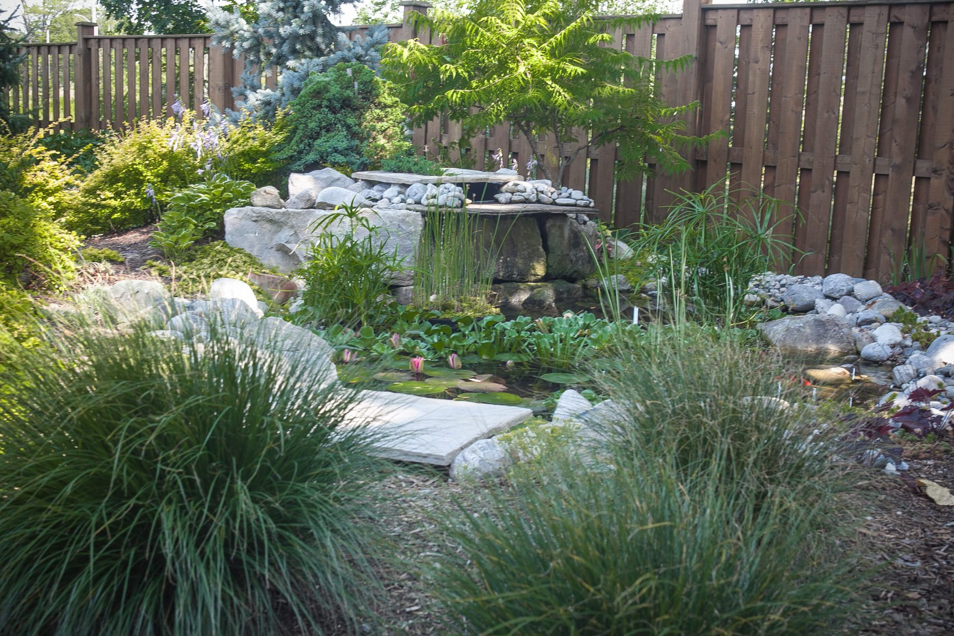 Small lily pond featured in garden