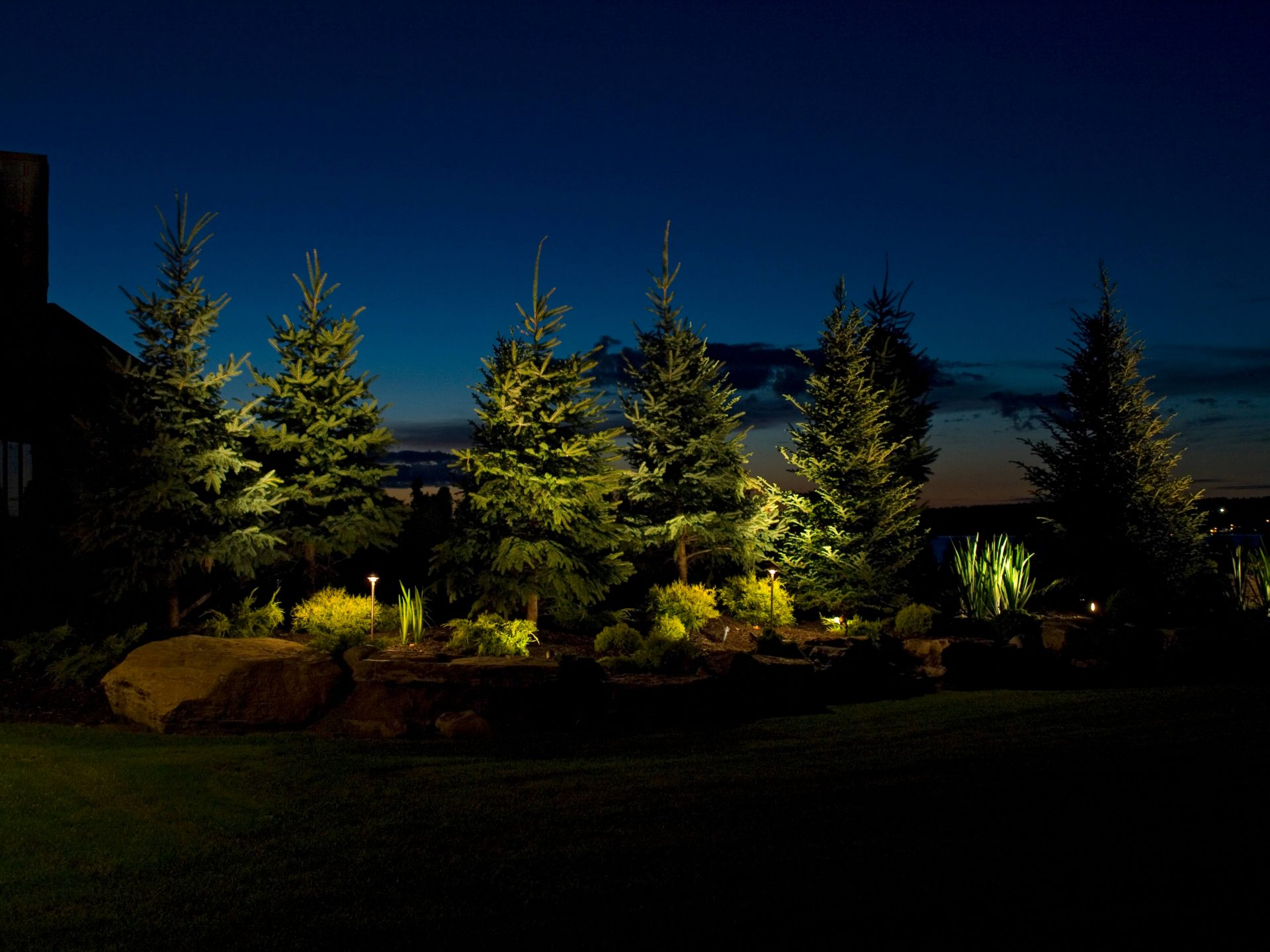 Evening photo of pine trees spotlighted by flood lights