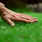 Slit-seeding your lawn from TLC Landscaping London