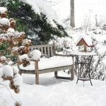 Bring life to your winter garden with TLC Landscaping in London