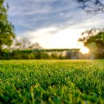 How to solve common lawn problems from TLC Landscaping London
